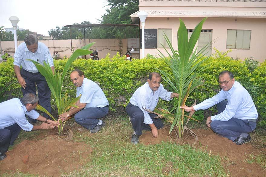 Tree-Plantation10