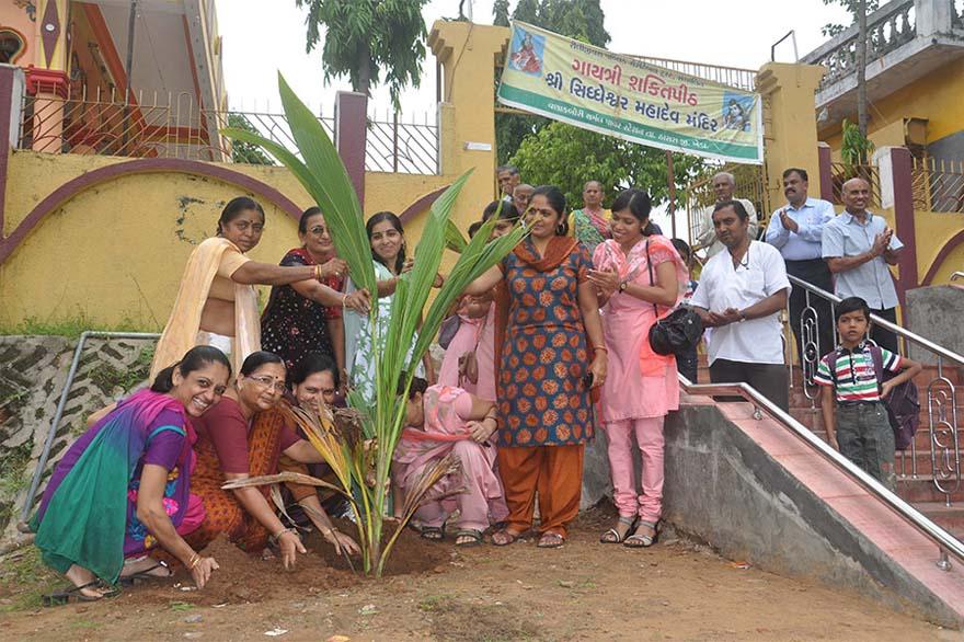 Tree-Plantation13
