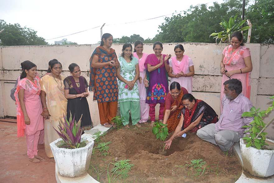 Tree-Plantation16