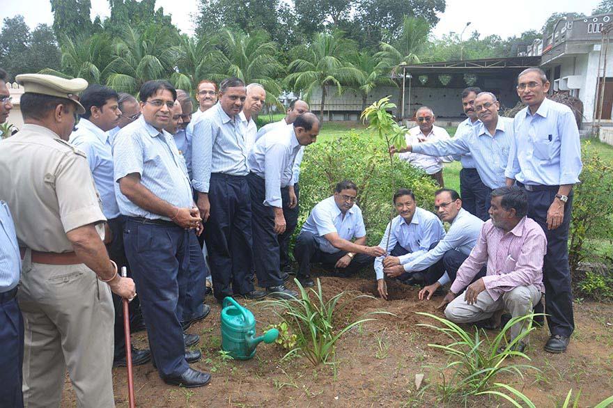 Tree-Plantation2