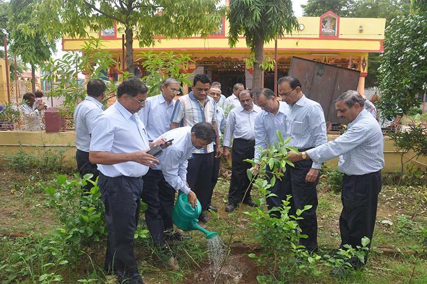 Tree-Plantation5