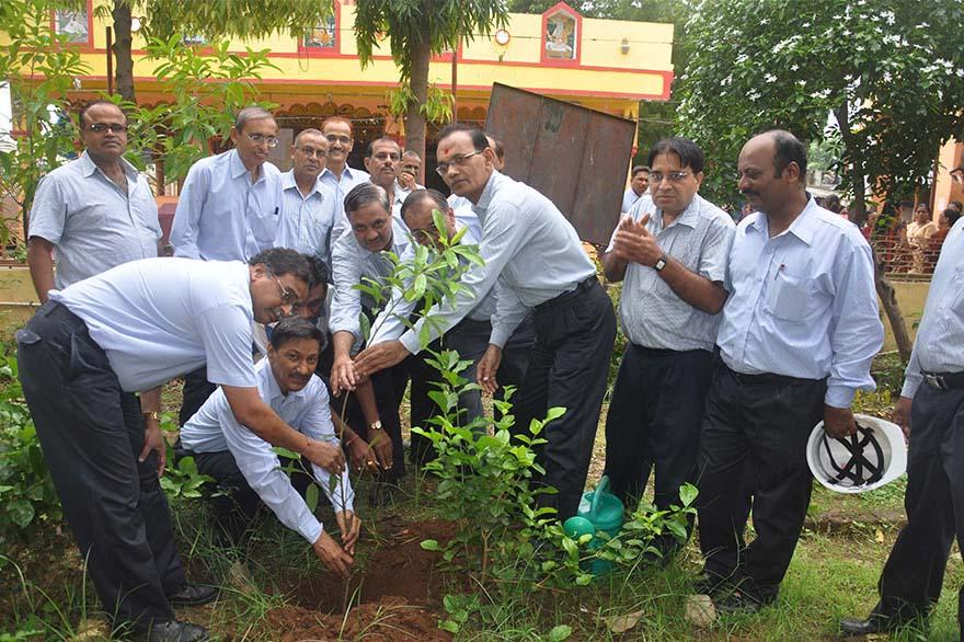 Tree-Plantation6