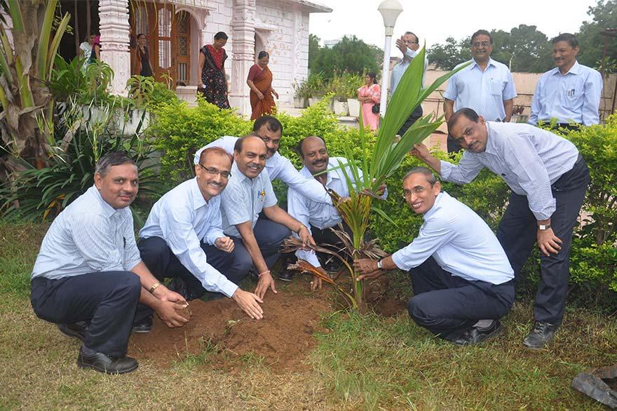 Tree-Plantation7