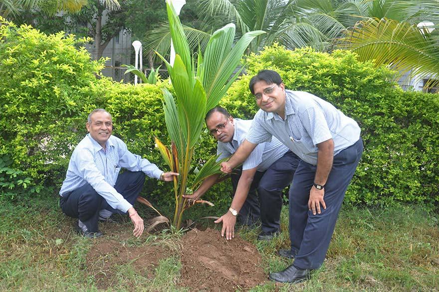 Tree-Plantation8